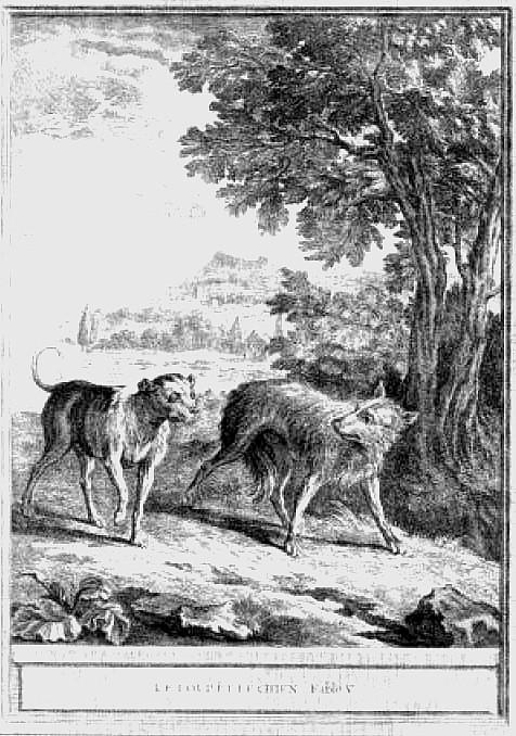 le_loup_et_le_chien
